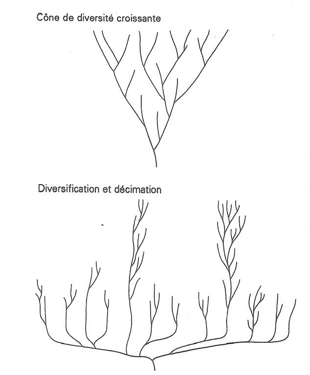 evo-arbre-buisson.jpg