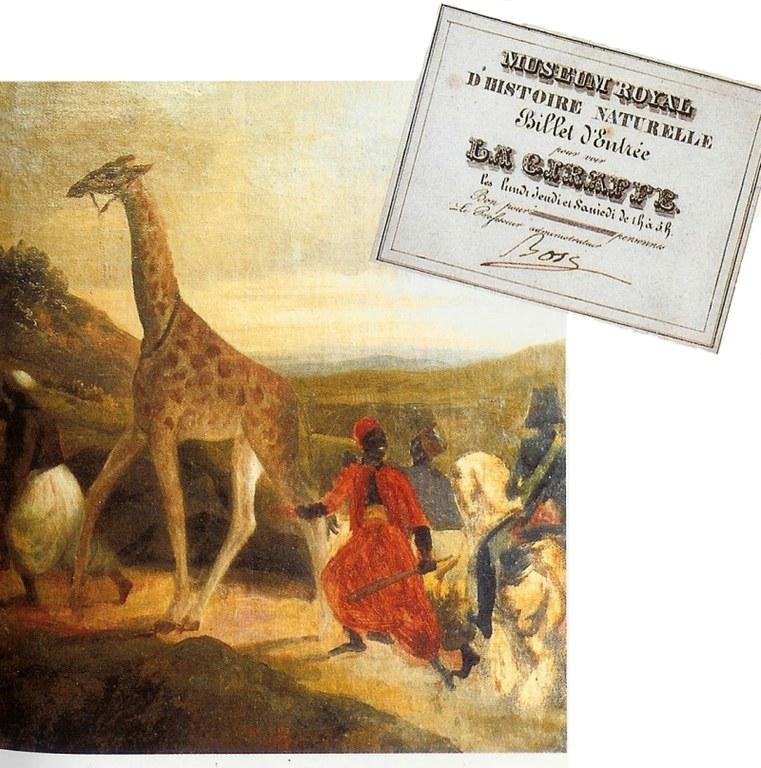giraffe1826-det.jpg