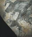 aurochschauvet.jpg