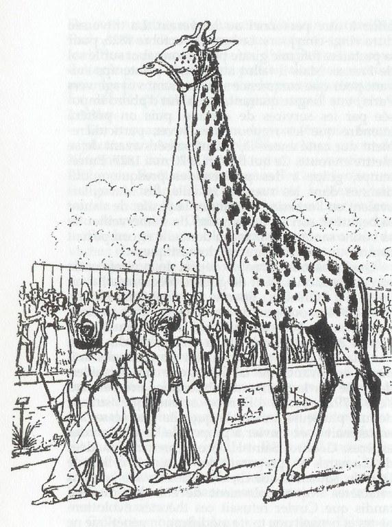 girafe1826nb.jpg