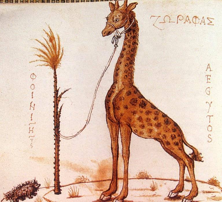 Girafe - vers 1450